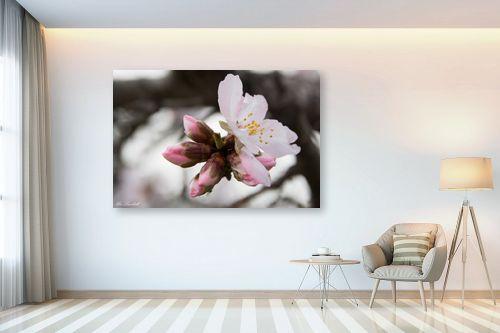 תמונה לבית - אורי לינסקיל - פרח השקד - מק''ט: 265847