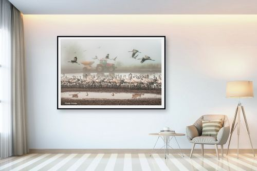 תמונה לבית - איזבלה אלקבץ - עגורים בערפל - מק''ט: 267109