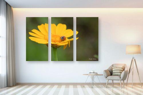 תמונה לבית - איזבלה אלקבץ - אורח על הפרח - מק''ט: 268021