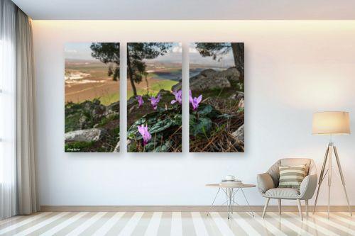 תמונה לבית - מיכאל שמידט - רקפת עם הנוף המושלם - מק''ט: 277585