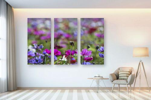 תמונה לבית - אורלי גור - כלניות בשלל צבעים 1 - מק''ט: 280708