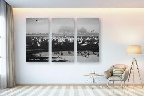 תמונה לבית - איזבלה אלקבץ - עגורים בשחור לבן - מק''ט: 294449