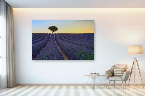 תמונה לבית - דורית ברקוביץ - בדד בשדה הלבנדר - מק''ט: 319319