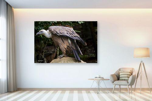 תמונה לבית - ענת שיוביץ - golden eagle נשר זהוב - מק''ט: 325208