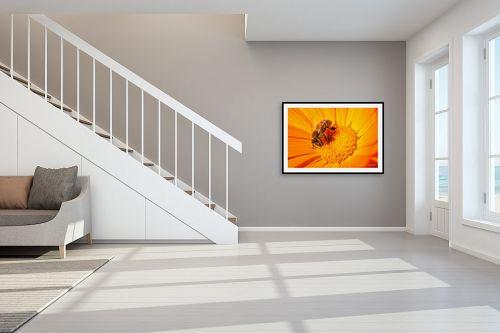 תמונה לחדר מדרגות - מיכאל שמידט - צוף החיים - מק''ט: 230447