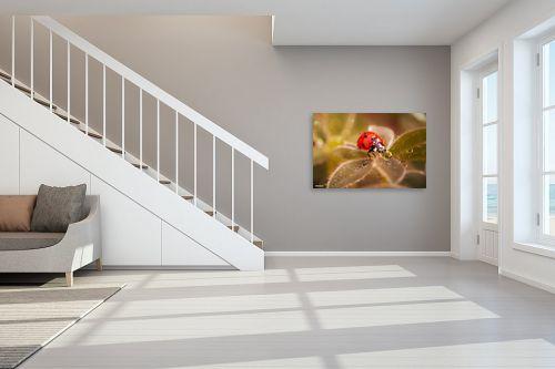 תמונה לחדר מדרגות - מיכאל שמידט - לגימה מהחיים - מק''ט: 245367