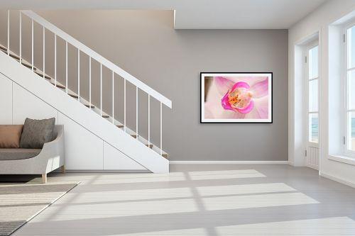תמונה לחדר מדרגות - איזבלה אלקבץ - סחלב  - מק''ט: 268435