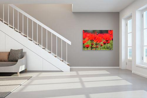תמונה לחדר מדרגות - אורית גפני - שדה כלניות - מק''ט: 270477