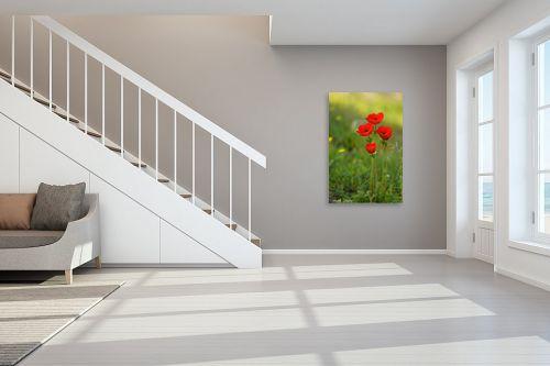 תמונה לחדר מדרגות - איזבלה אלקבץ - כלניות - מק''ט: 278946
