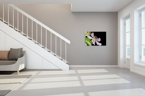 תמונה לחדר מדרגות - קובי פרידמן - פריחת פטל - מק''ט: 31111