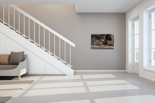 תמונה לחדר מדרגות - כרמל תדמור - עיטם לבן זנב - מק''ט: 329167