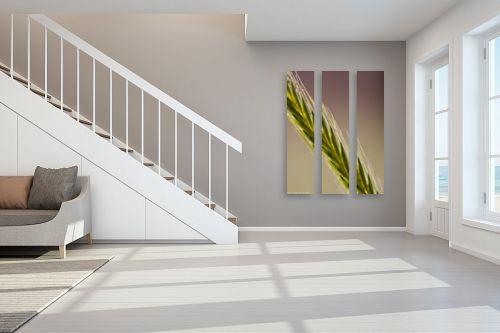 תמונה לחדר מדרגות - שרית סלימן - שיבולת מוארת - מק''ט: 36620