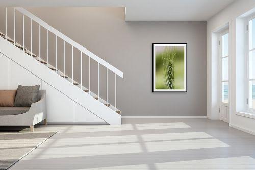 תמונה לחדר מדרגות - שרית סלימן - שיבולת וטיפות - מק''ט: 36872
