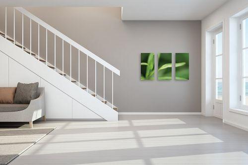 תמונה לחדר מדרגות - פני אלימלך - תגלית בירוק 1 - מק''ט: 83117