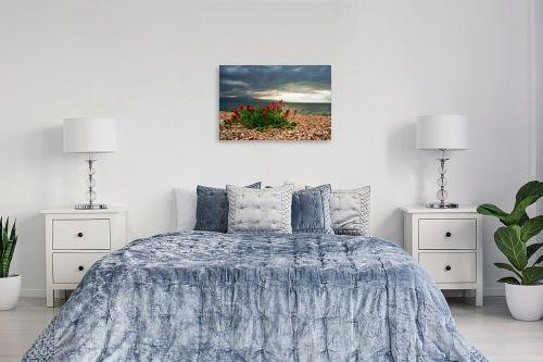 תמונה לחדר שינה - קובי פרידמן - פריחה בים המלח - מק''ט: 19595