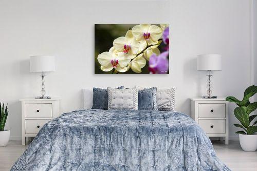 תמונה לחדר שינה - אורלי גור - סחלבים 13 - מק''ט: 279262