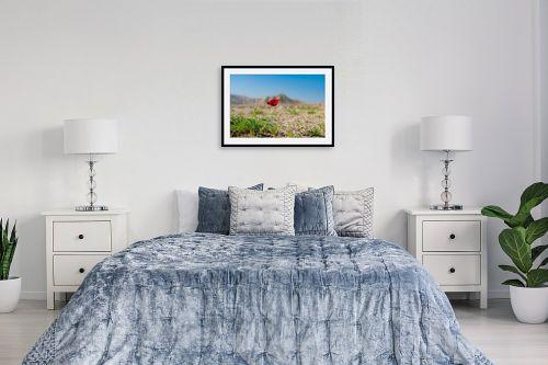 תמונה לחדר שינה - שי וייס - פרג מדבר יהודה - מק''ט: 280153