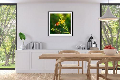 תמונה לפינת אוכל - ארי בלטינשטר - צבעים בטבע - מק''ט: 308973