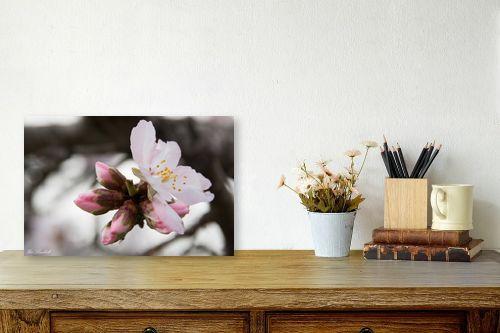 תמונה לשולחן - אורי לינסקיל - פרח השקד - מק''ט: 265847