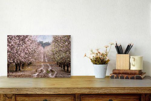 תמונה לשולחן - אורית גפני - שקדיות כל הדרך - מק''ט: 312653