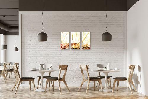 תמונה למסעדה - רוזה לשצ'ינסקי - ענפים - מק''ט: 204271