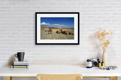 תמונה לפינת עבודה - אייל ברטוב - עדר במדבר - מק''ט: 297260