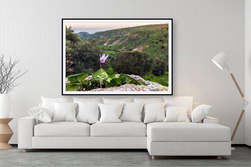 תמונה לסלון - מיכאל שמידט - רקפת עם נוף לים - מק''ט: 252516
