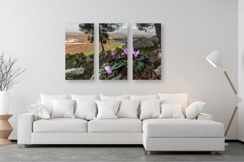 תמונה לסלון - מיכאל שמידט - רקפת עם הנוף המושלם - מק''ט: 277585