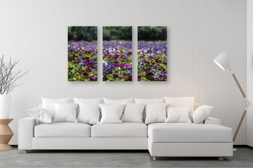 תמונה לסלון - אורלי גור - כלניות בשלל צבעים 2 - מק''ט: 280709