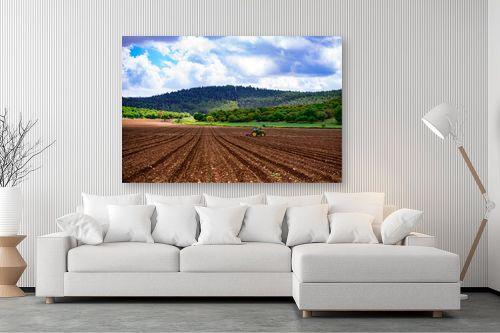 תמונה לסלון - שי וייס - שדות עמק יזרעאל - מק''ט: 281469