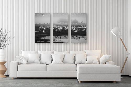 תמונה לסלון - איזבלה אלקבץ - עגורים בשחור לבן - מק''ט: 294449