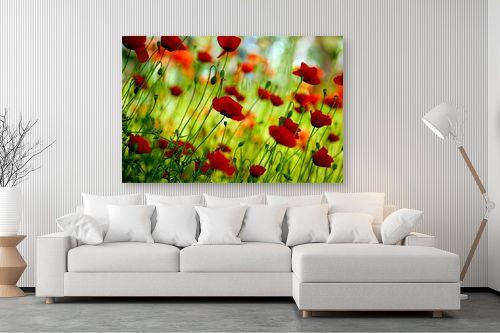 תמונה לסלון - אורית גפני - אביב בירוק אדום - מק''ט: 300573