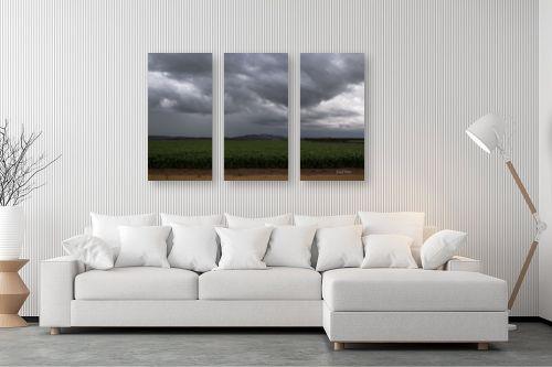 תמונה לסלון - אלעד דרור - שדה חיטה ביום גשם - מק''ט: 313046