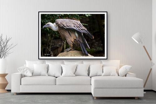 תמונה לסלון - ענת שיוביץ - golden eagle נשר זהוב - מק''ט: 325208