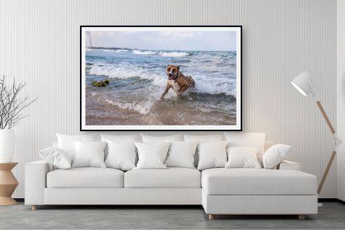 תמונה לסלון - אור פריאס - כלבת ים - מק''ט: 329449