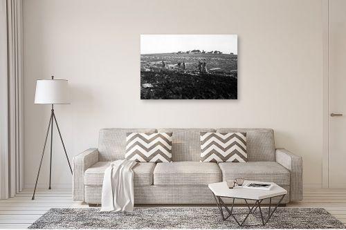 תמונה לסלון - דוד לסלו סקלי - כפר עציון 1946 הכשרת קרקע - מק''ט: 144267