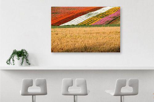 תמונה לבר - אייל הצפון - שטיח פריחות - מק''ט: 141989