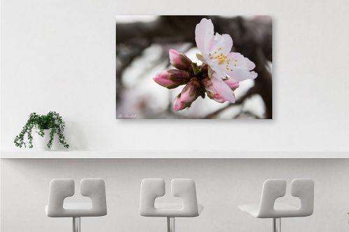 תמונה לבר - אורי לינסקיל - פרח השקד - מק''ט: 265847