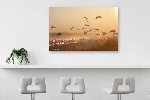 תמונה לבר - איזבלה אלקבץ - עגורים בזריחה - מק''ט: 267097