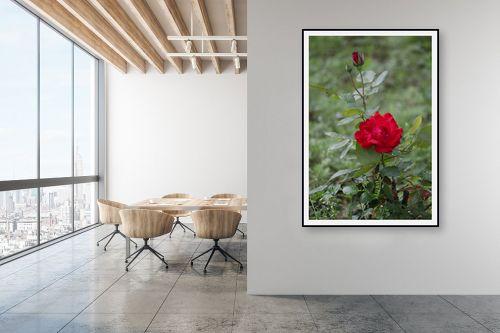 תמונה למשרד - דן ששתיאל - ורד - מק''ט: 232784