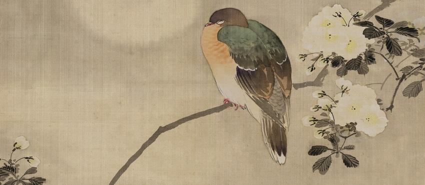 גלריית תמונות של ציפורים