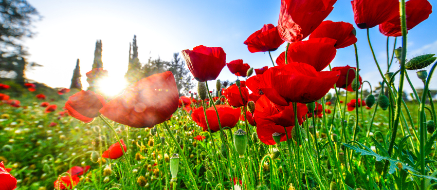 גלריית תמונות של פרחים