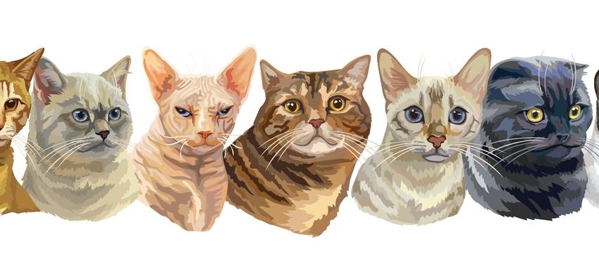 גלריית תמונות של חתולים