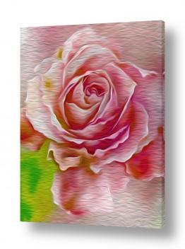 פרחים שושנה   #0020 אבסטרקט
