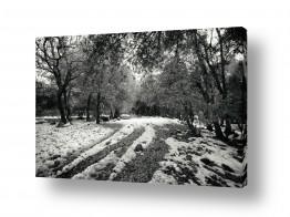 צילומים שחור לבן | Rainy morning