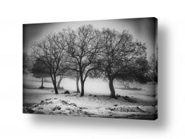 צילומים מזג-אוויר | חורף בשחור לבן
