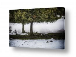 צילומים אוהד דאיה | עץ הדעת