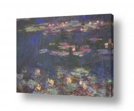 פרחים לוטוס | water lilies חבצלות מים