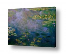 פרחים לוטוס | חבצלות מים water lillies