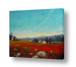 צמחים פרחים | אדומים בשדה